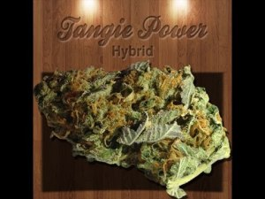 Tangie Power Review High Desert Relief Mmd Albuquerque Nm